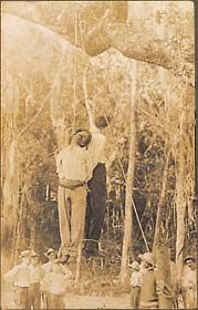 The bound corpses of two Italian immigrants, Castenego Ficarrotta and Angelo Albano, handcuffed together, hanging in a Florida swamp.  One with note affixed to feet, the other with pipe in mouth.  September 9, 1910.  Gelatin silver print. 61/2 x 4 in.